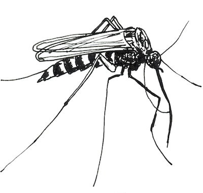 mosquit