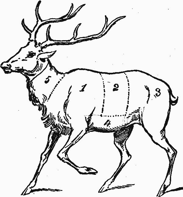 The Deer, the Dad, Etc…