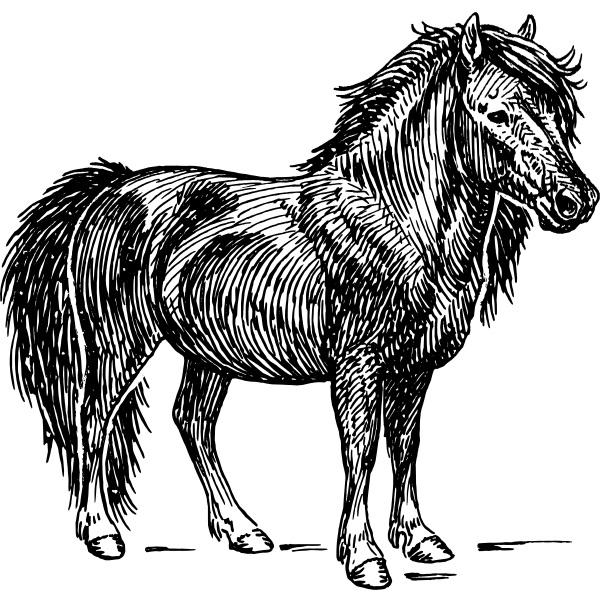 Drunken Pony Blues